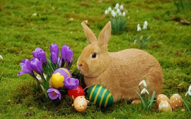 huevos-pascua-conejo